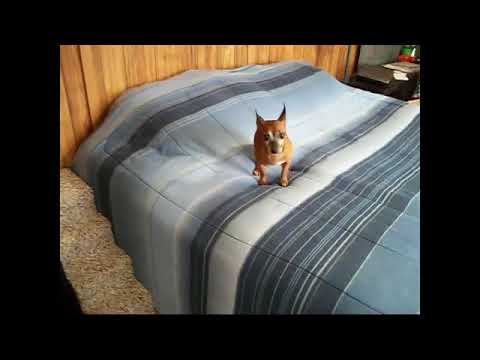 Puppy Stepper Dog Bed Steps Stairs